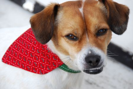 slip-on dog bandana christmas crafts holiday accessories for your pet inexpensive easy