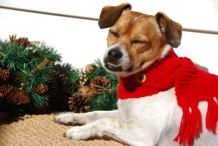 dog scarf how to DIY knitting patterns free, holiday christmas pet outfit
